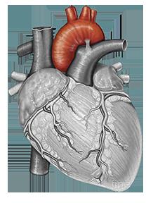 Patologie della radice aortica e dell'aorta ascendente